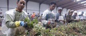 """""""Los inmigrantes fortalecen el país debido a su arduo trabajo y talentos"""", dicen los encuestados"""