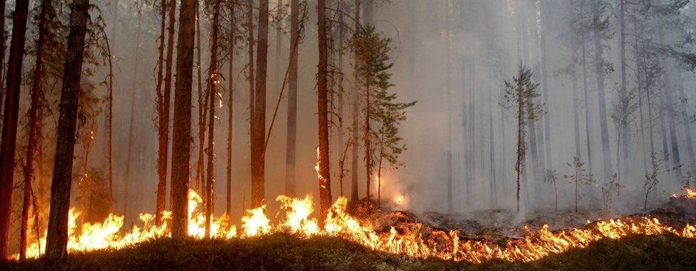En Suecia hubo 80 incendios descontrolados el pasado 15 de julio debido al tiempo seco