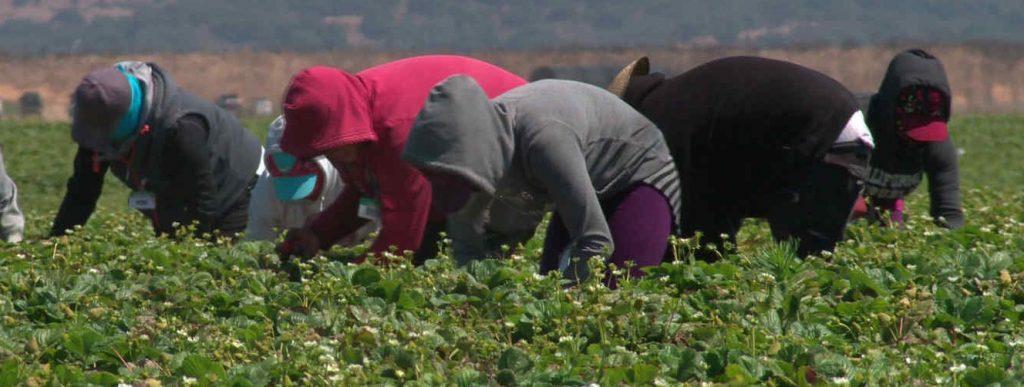El 22,5% de trabajadores en el campo recibe un trato humillante y el 46% cobra menos de lo que le corresponde