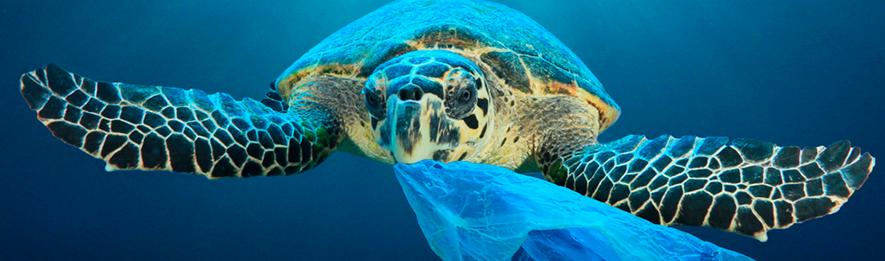 tortuga con plástico