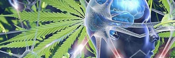 daños consumo cannabis