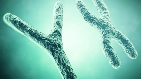 La revista Science constata que el sexo está ya predeterminado en las células
