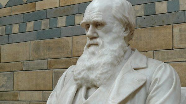 ADN Darwin